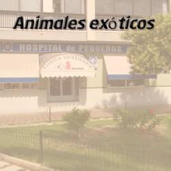 Animales exóticos